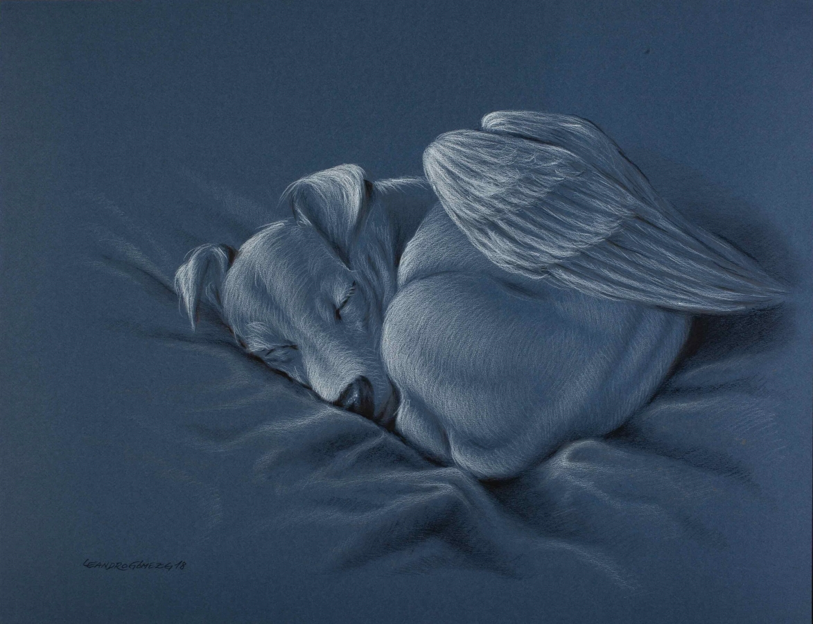'Animangeles' de Leandro Gómez.